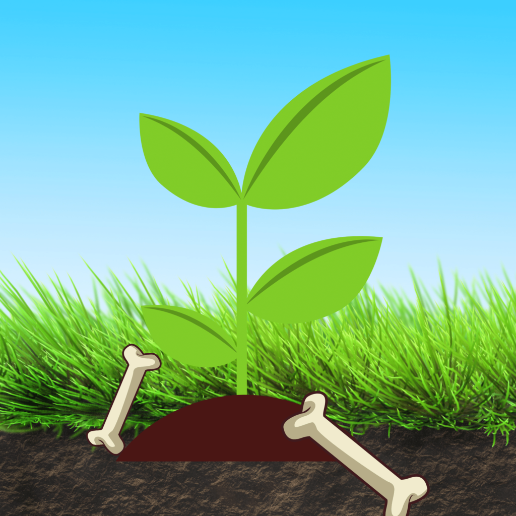 How to use bone meal for your plants